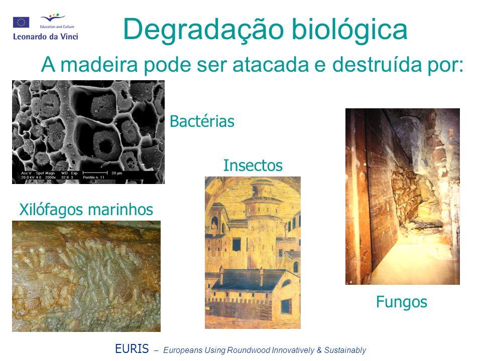 Degradação biológica A madeira pode ser atacada e destruída por: