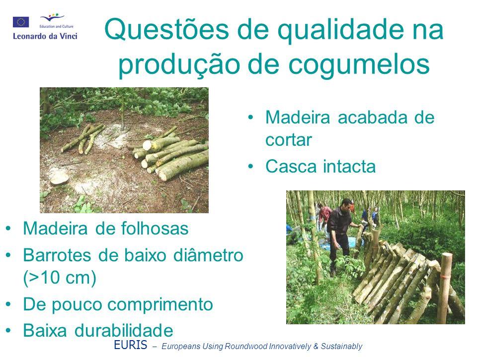 Questões de qualidade na produção de cogumelos