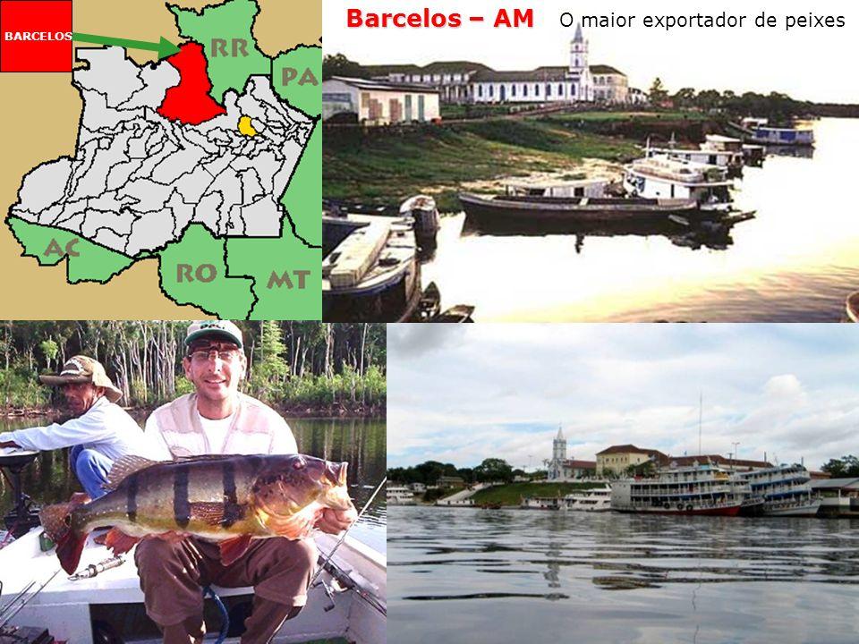 Barcelos – AM O maior exportador de peixes