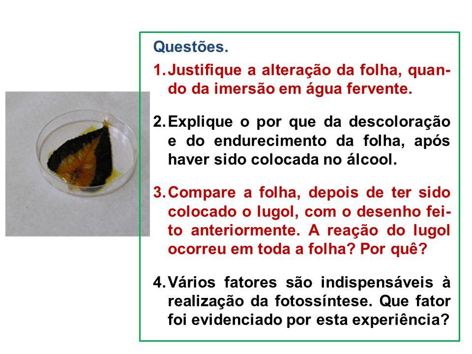 Questões. Justifique a alteração da folha, quan- do da imersão em água fervente.