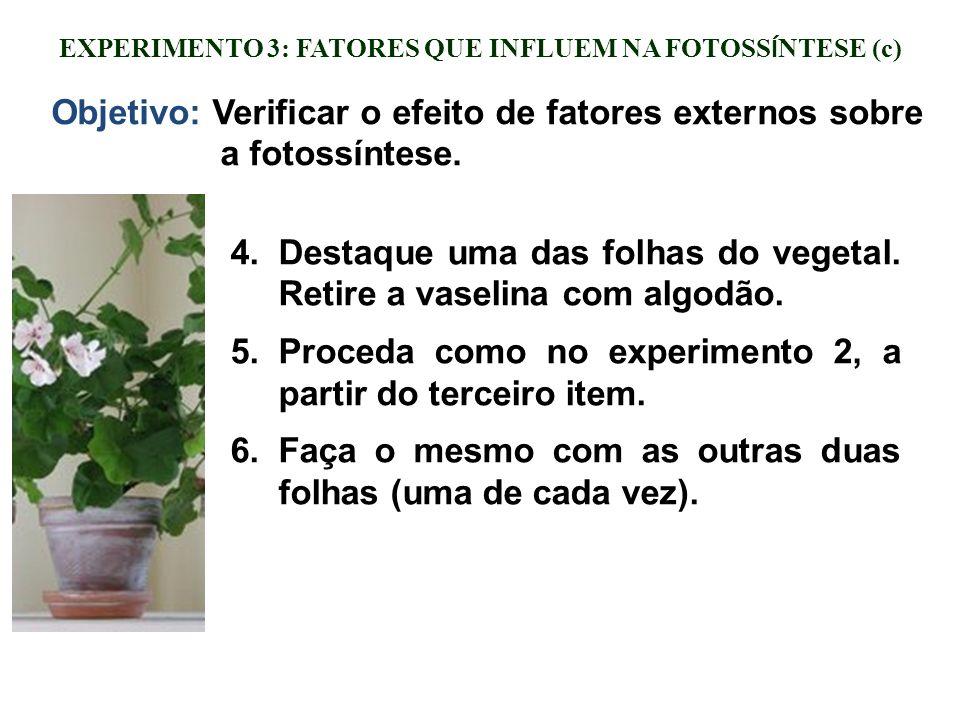 Objetivo: Verificar o efeito de fatores externos sobre a fotossíntese.