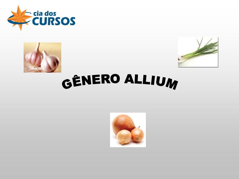 GÊNERO ALLIUM