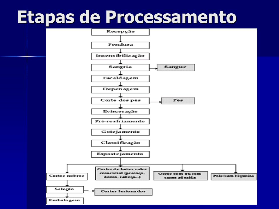 Etapas de Processamento
