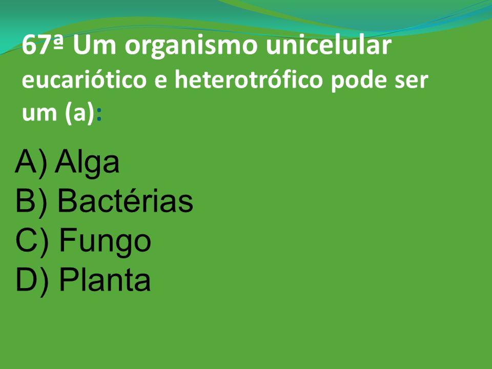 A) Alga B) Bactérias C) Fungo D) Planta