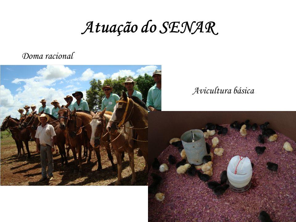 Atuação do SENAR Doma racional Avicultura básica