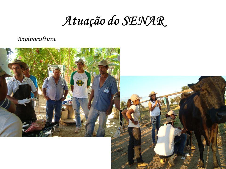 Atuação do SENAR Bovinocultura