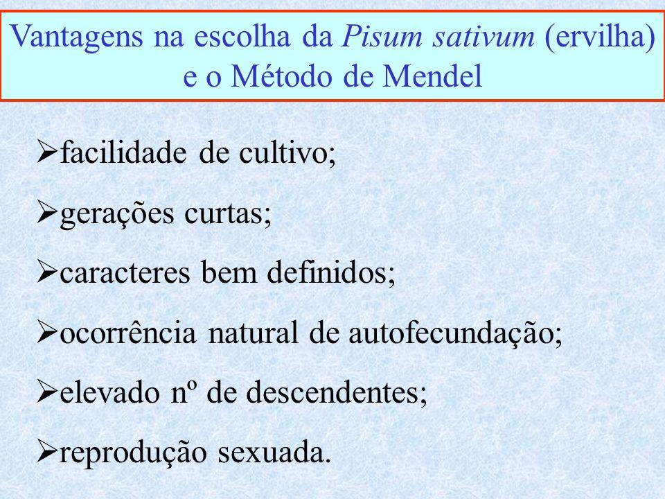 Vantagens na escolha da Pisum sativum (ervilha) e o Método de Mendel