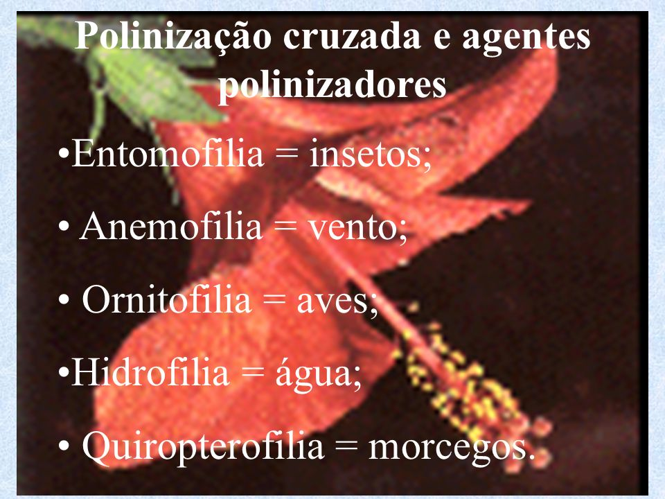 Polinização cruzada e agentes polinizadores