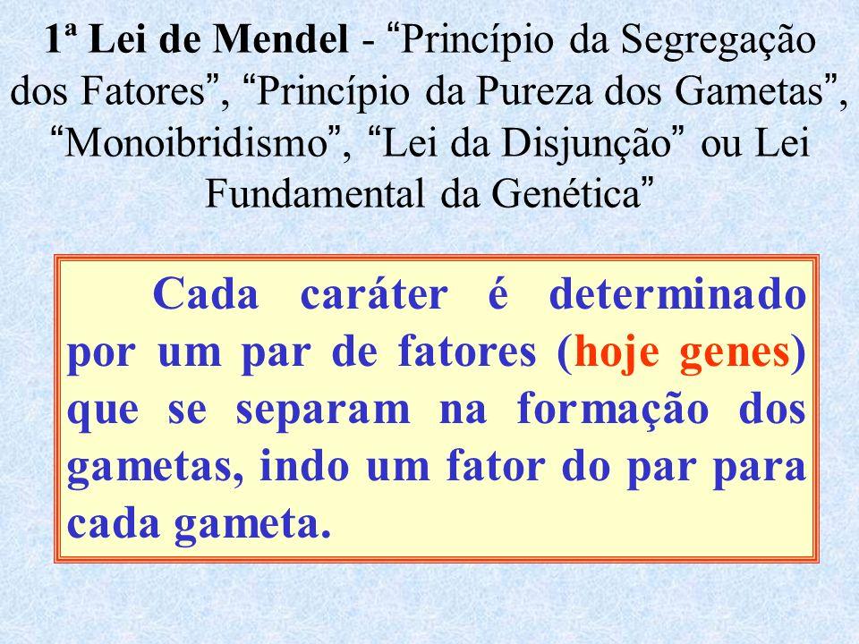 1ª Lei de Mendel - Princípio da Segregação dos Fatores , Princípio da Pureza dos Gametas , Monoibridismo , Lei da Disjunção ou Lei Fundamental da Genética