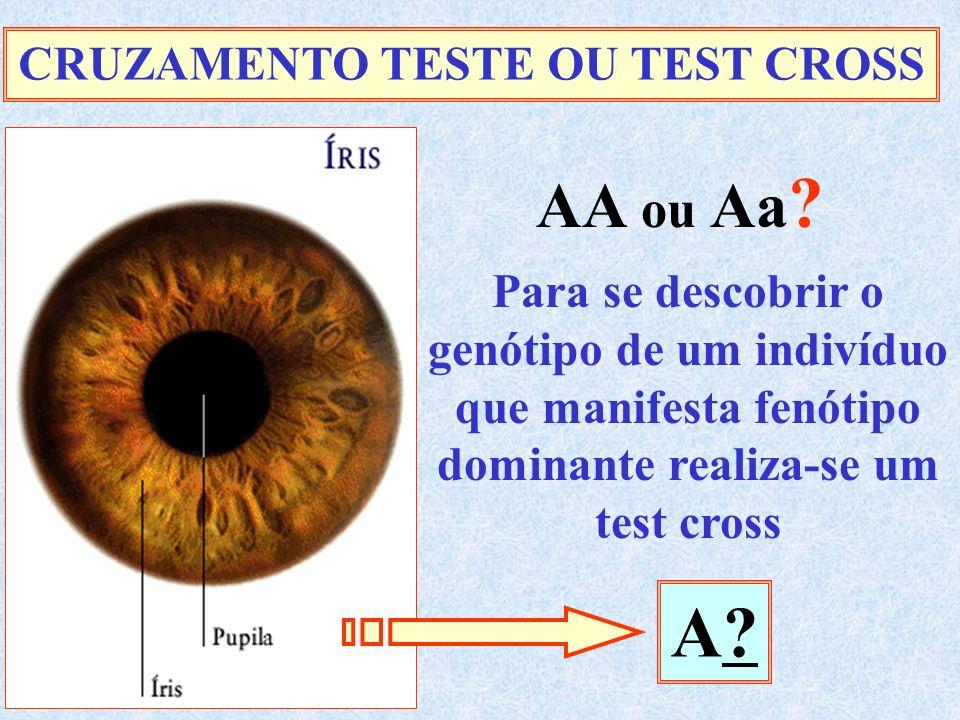 CRUZAMENTO TESTE OU TEST CROSS