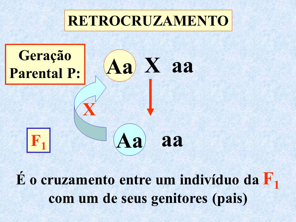 Aa X aa Aa Aa Aa aa X F1 RETROCRUZAMENTO Geração Parental P:
