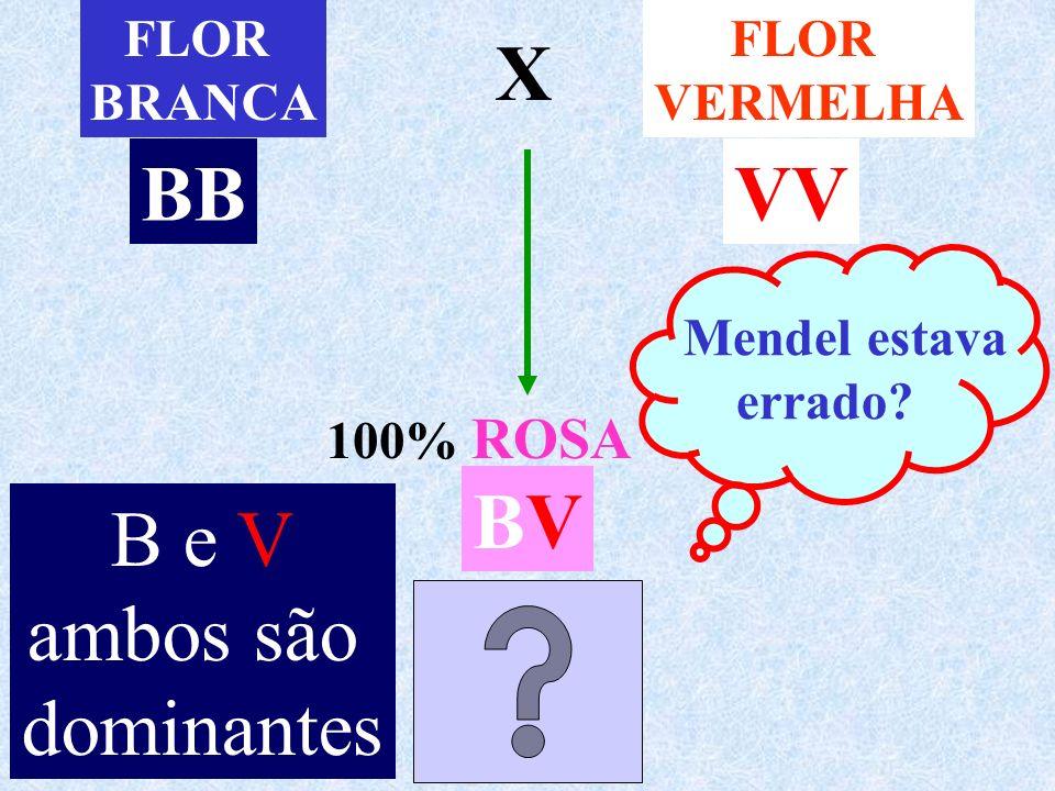 X BB VV BV B e V ambos são dominantes FLOR BRANCA FLOR VERMELHA