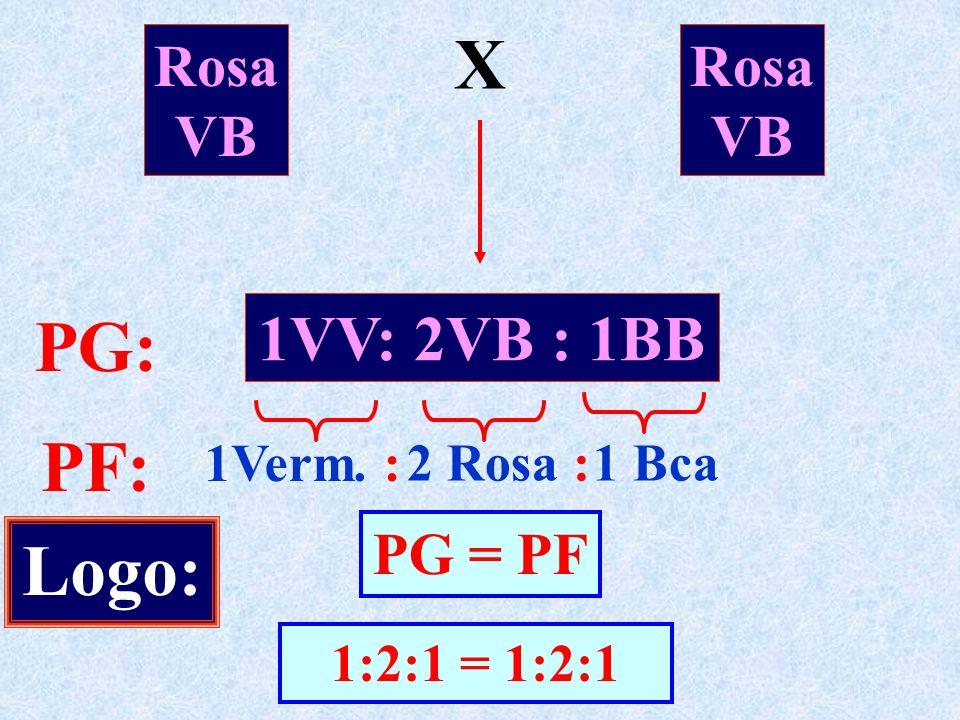 X PG: PF: Logo: 1VV: 2VB : 1BB Rosa VB Rosa VB PG = PF 1Verm. :