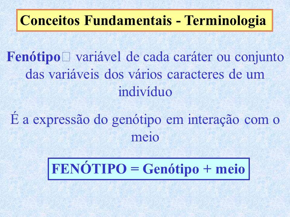 Conceitos Fundamentais - Terminologia