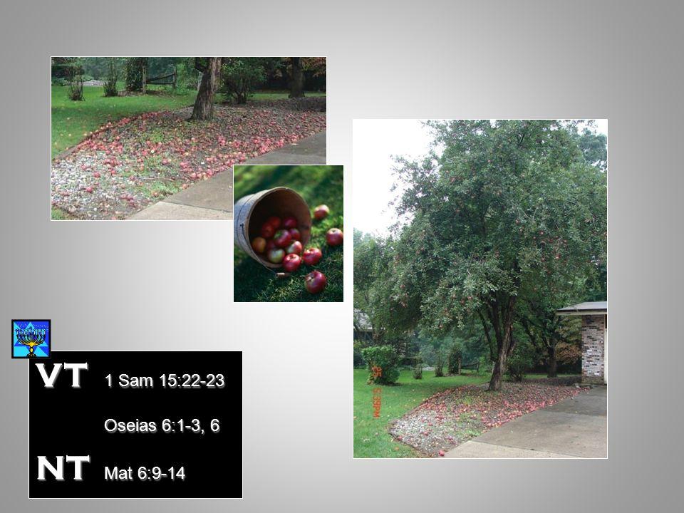 VT 1 Sam 15:22-23 Oseias 6:1-3, 6 NT Mat 6:9-14 Mat 12:7-13