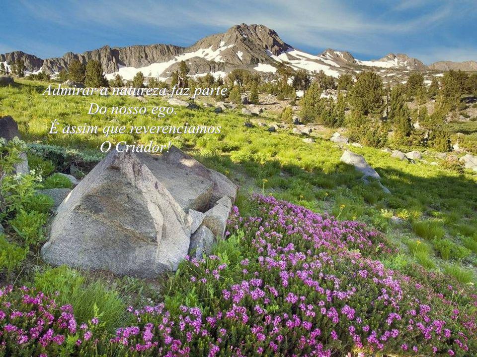 Admirar a natureza faz parte Do nosso ego. É assim que reverenciamos