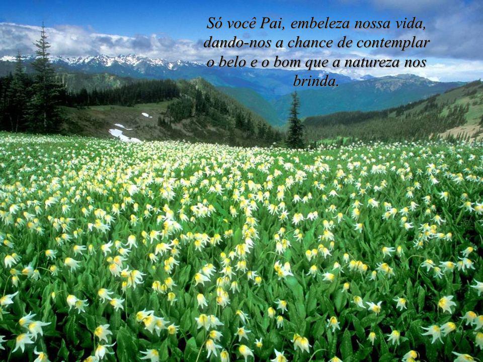 Só você Pai, embeleza nossa vida, dando-nos a chance de contemplar o belo e o bom que a natureza nos brinda.