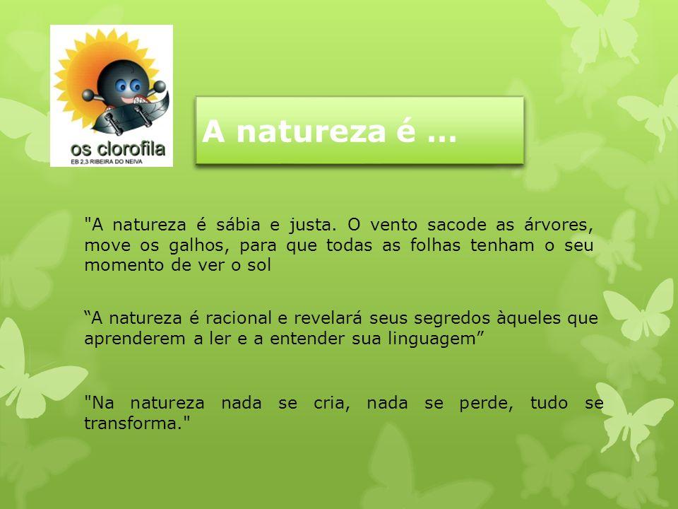 A natureza é … A natureza é sábia e justa. O vento sacode as árvores, move os galhos, para que todas as folhas tenham o seu momento de ver o sol.