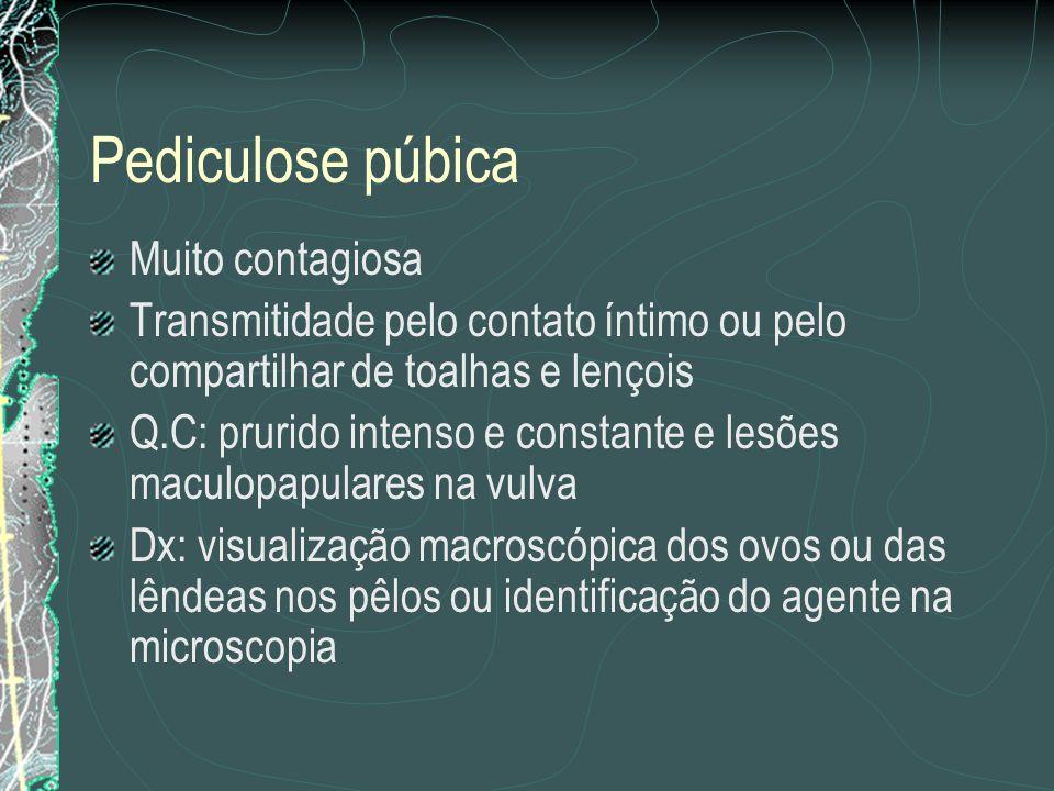 Pediculose púbica Muito contagiosa