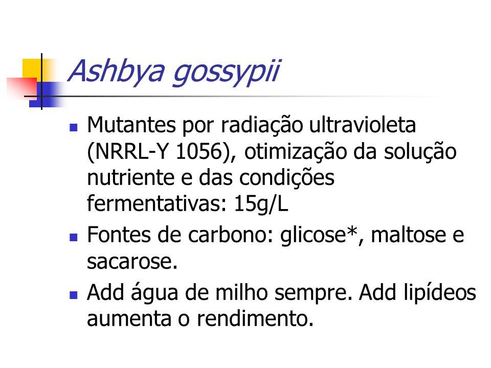 Ashbya gossypii Mutantes por radiação ultravioleta (NRRL-Y 1056), otimização da solução nutriente e das condições fermentativas: 15g/L.