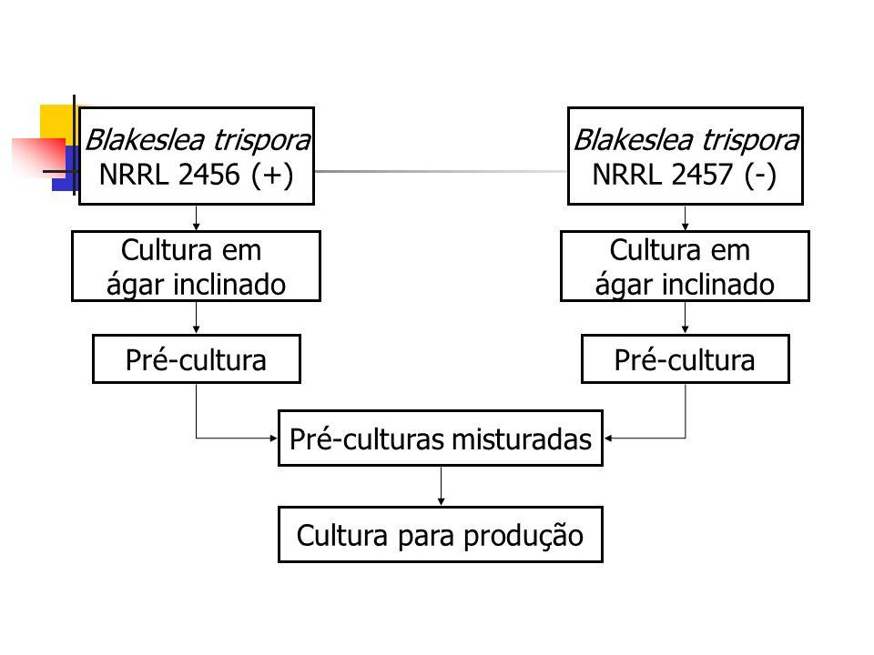 Pré-culturas misturadas