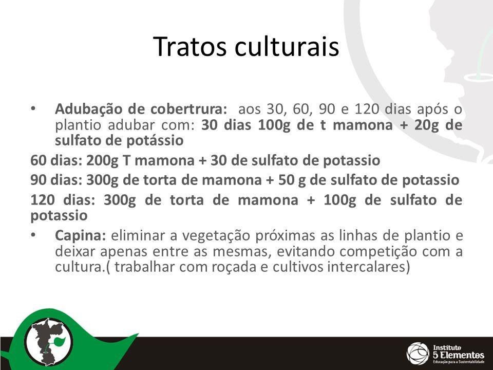 Tratos culturais Adubação de cobertrura: aos 30, 60, 90 e 120 dias após o plantio adubar com: 30 dias 100g de t mamona + 20g de sulfato de potássio.