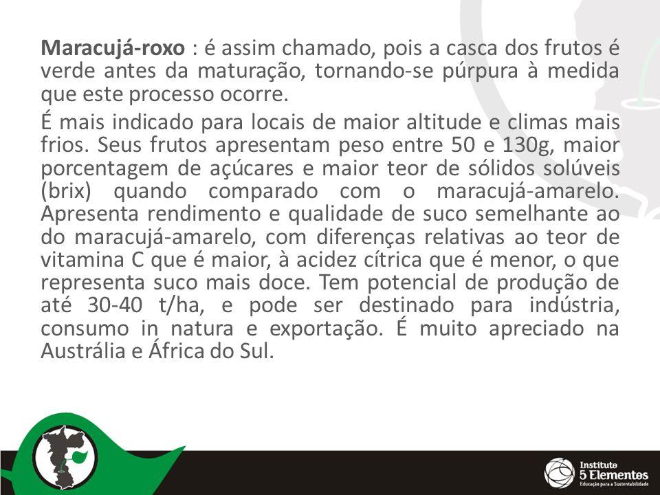 Maracujá-roxo : é assim chamado, pois a casca dos frutos é verde antes da maturação, tornando-se púrpura à medida que este processo ocorre.