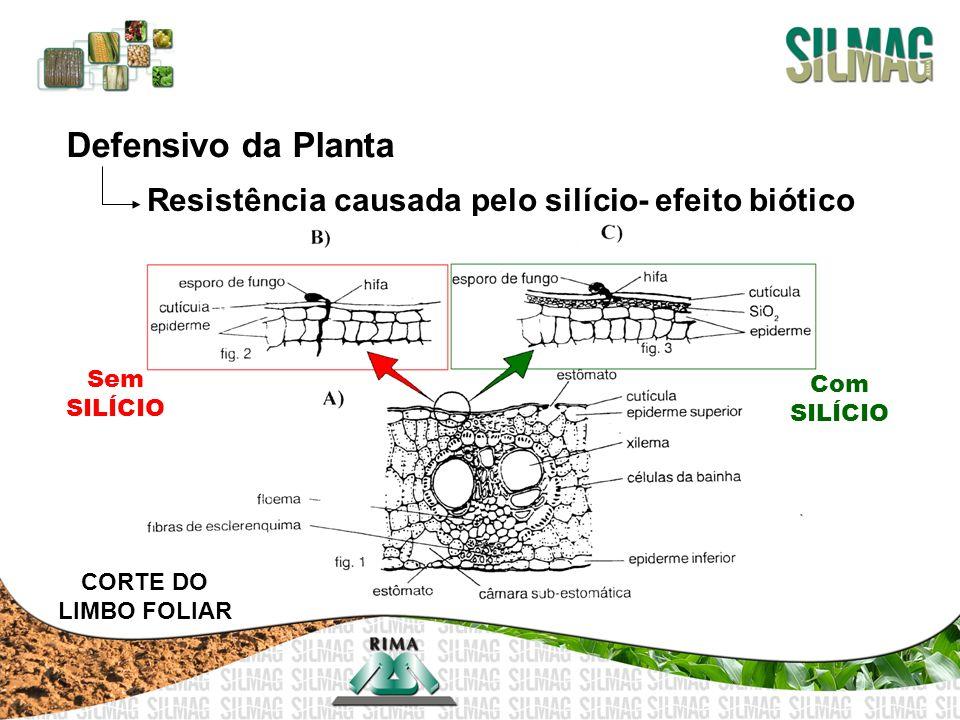 Defensivo da Planta Resistência causada pelo silício- efeito biótico