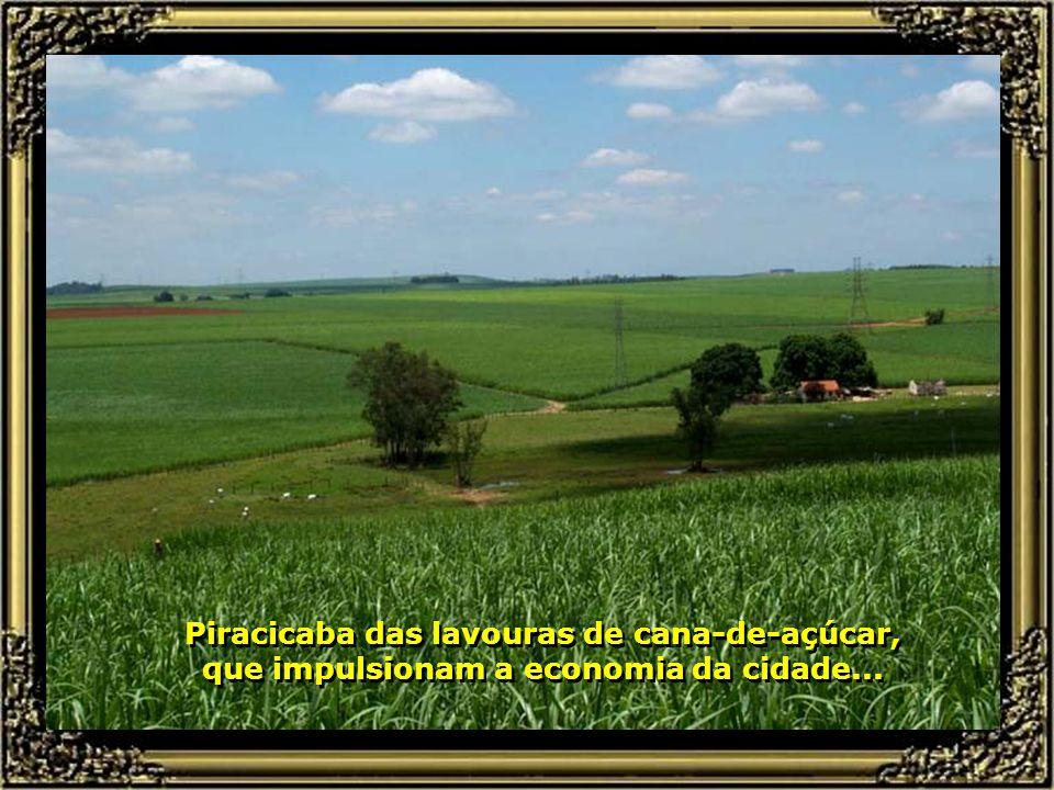 Piracicaba das lavouras de cana-de-açúcar, que impulsionam a economia da cidade...