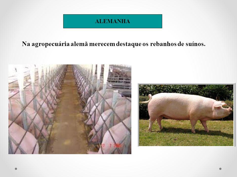 Na agropecuária alemã merecem destaque os rebanhos de suínos.