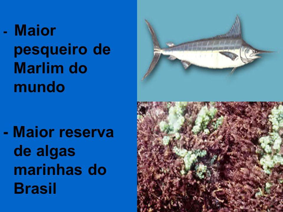 - Maior reserva de algas marinhas do Brasil