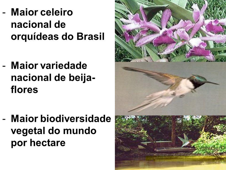Maior celeiro nacional de orquídeas do Brasil