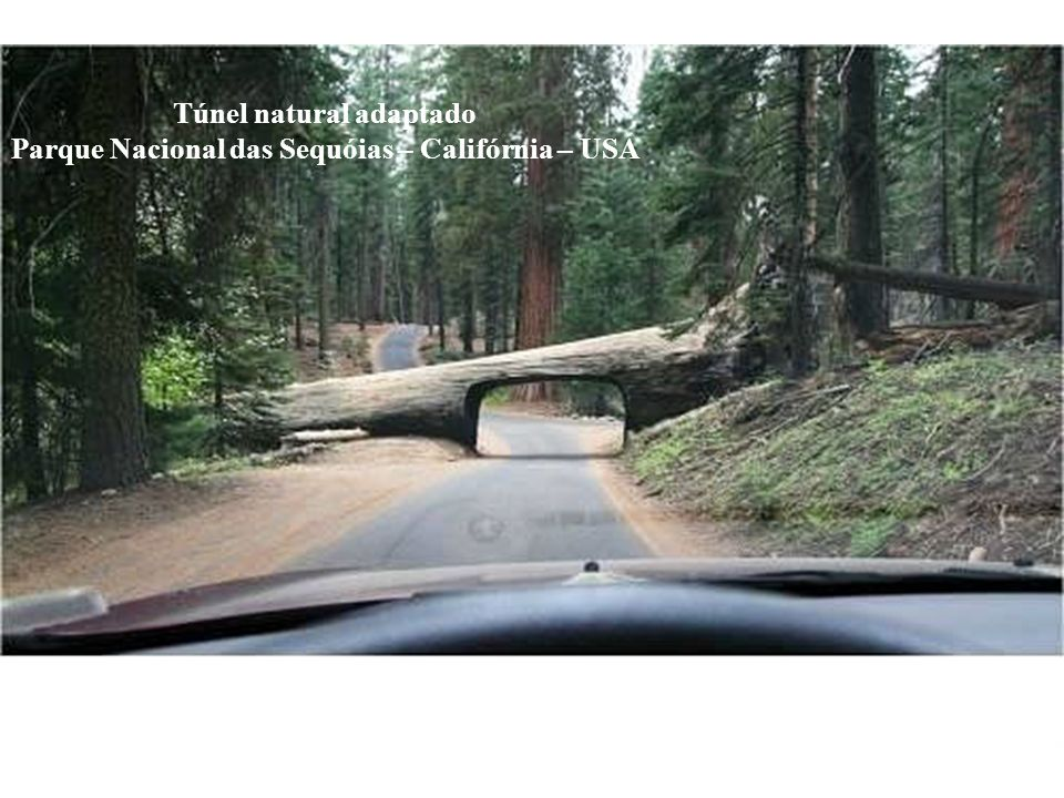 Túnel natural adaptado Parque Nacional das Sequóias – Califórnia – USA