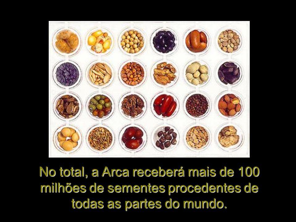 No total, a Arca receberá mais de 100 milhões de sementes procedentes de todas as partes do mundo.