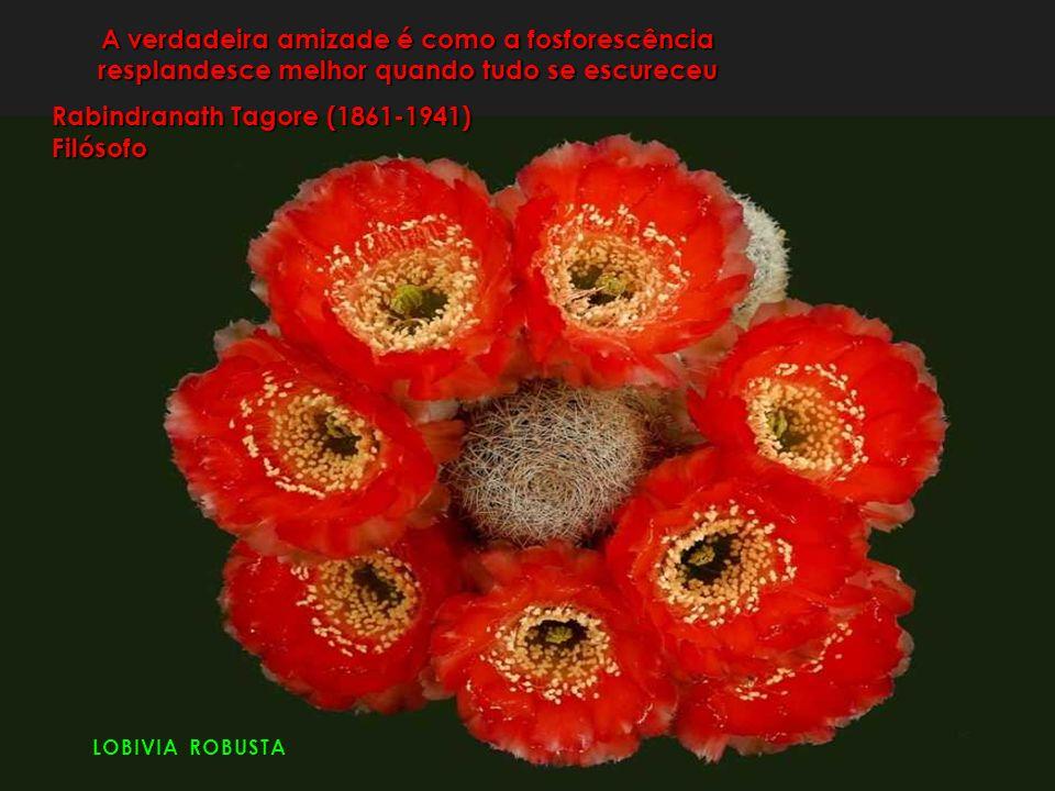 A verdadeira amizade é como a fosforescência