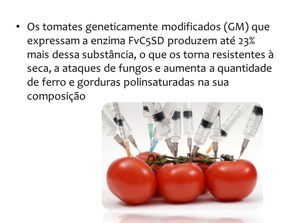 Os tomates geneticamente modificados (GM) que expressam a enzima FvC5SD produzem até 23% mais dessa substância, o que os torna resistentes à seca, a ataques de fungos e aumenta a quantidade de ferro e gorduras polinsaturadas na sua composição