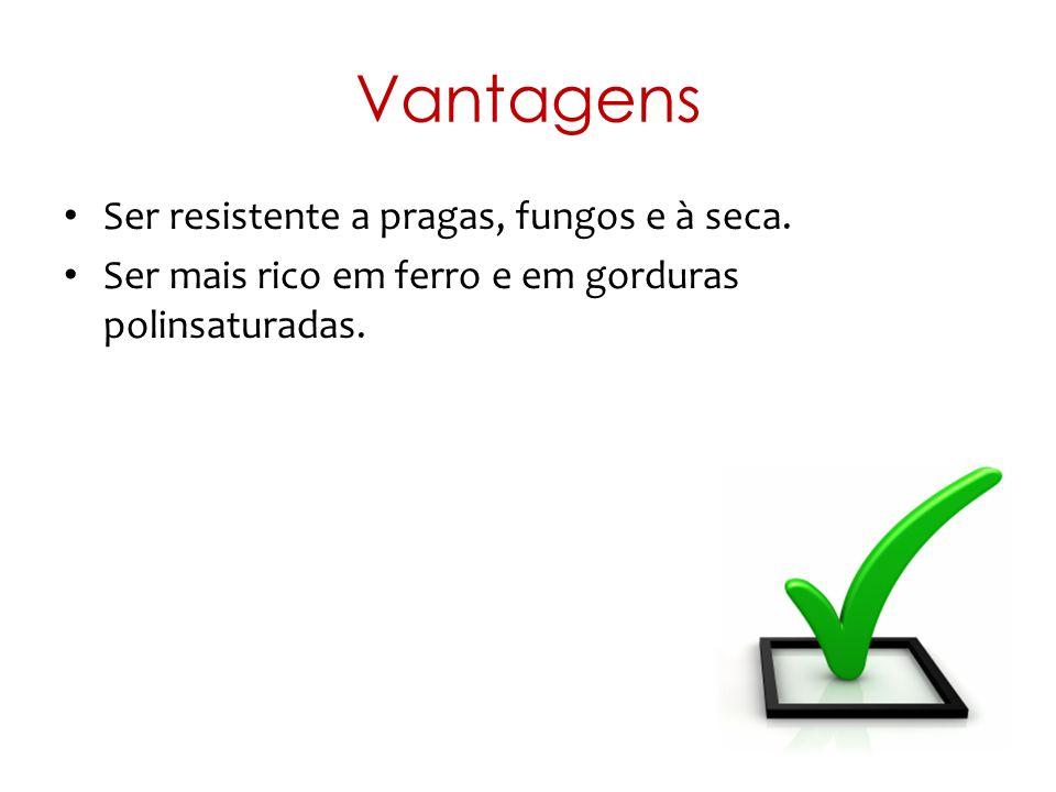 Vantagens Ser resistente a pragas, fungos e à seca.
