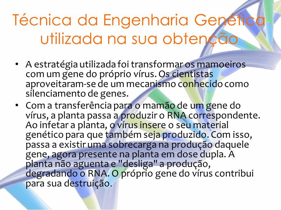 Técnica da Engenharia Genética utilizada na sua obtenção