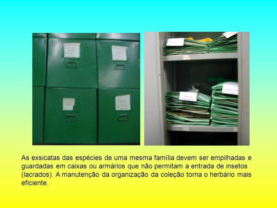 As exsicatas das espécies de uma mesma família devem ser empilhadas e guardadas em caixas ou armários que não permitam a entrada de insetos (lacrados).