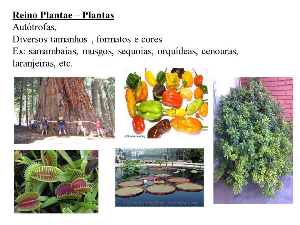 Reino Plantae – Plantas