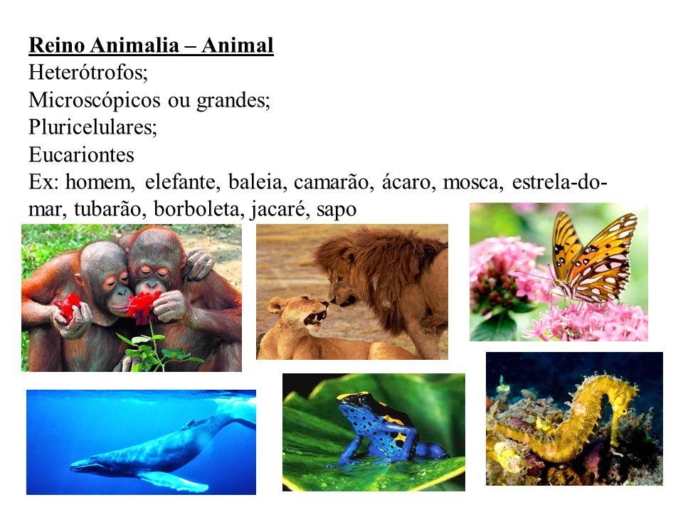 Reino Animalia – Animal