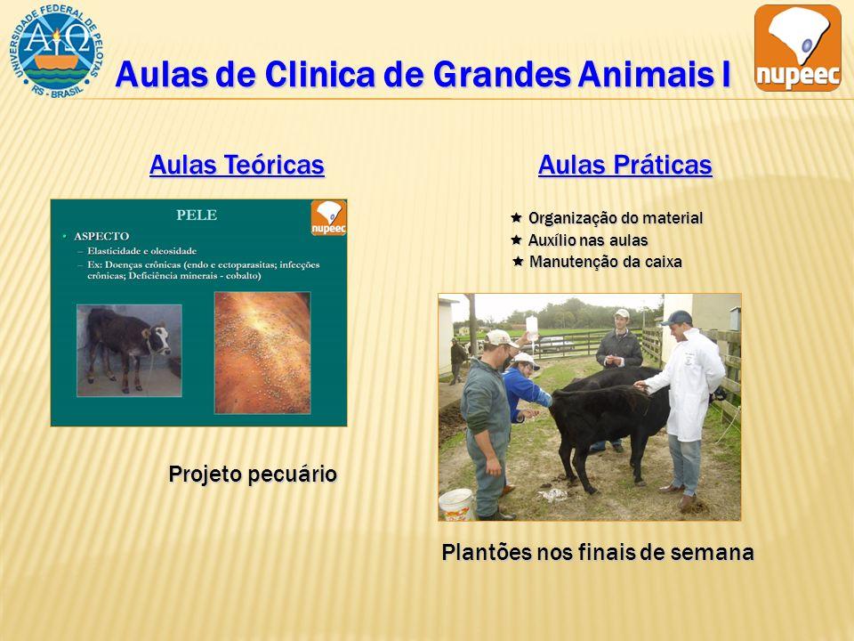Aulas de Clinica de Grandes Animais I