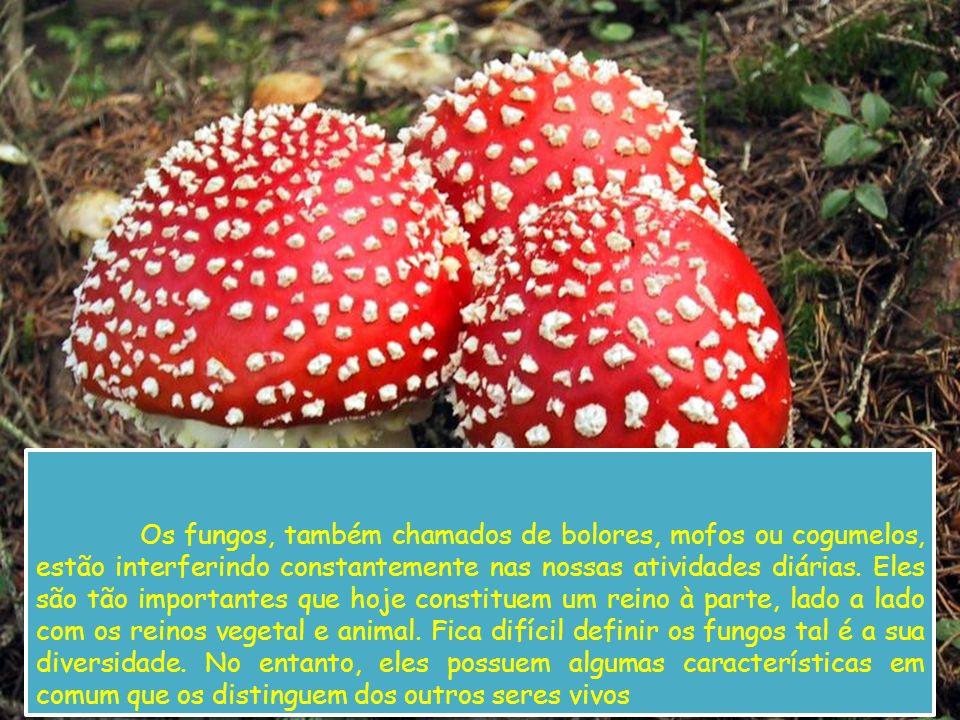 Os fungos, também chamados de bolores, mofos ou cogumelos, estão interferindo constantemente nas nossas atividades diárias.