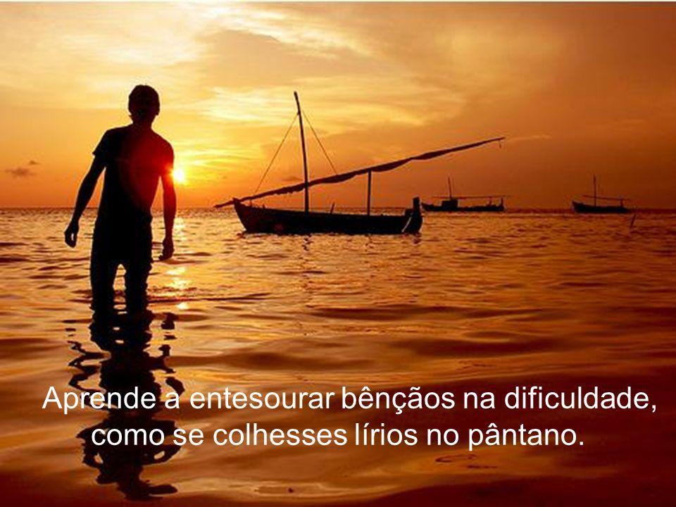 Aprende a entesourar bênçãos na dificuldade, como se colhesses lírios no pântano.