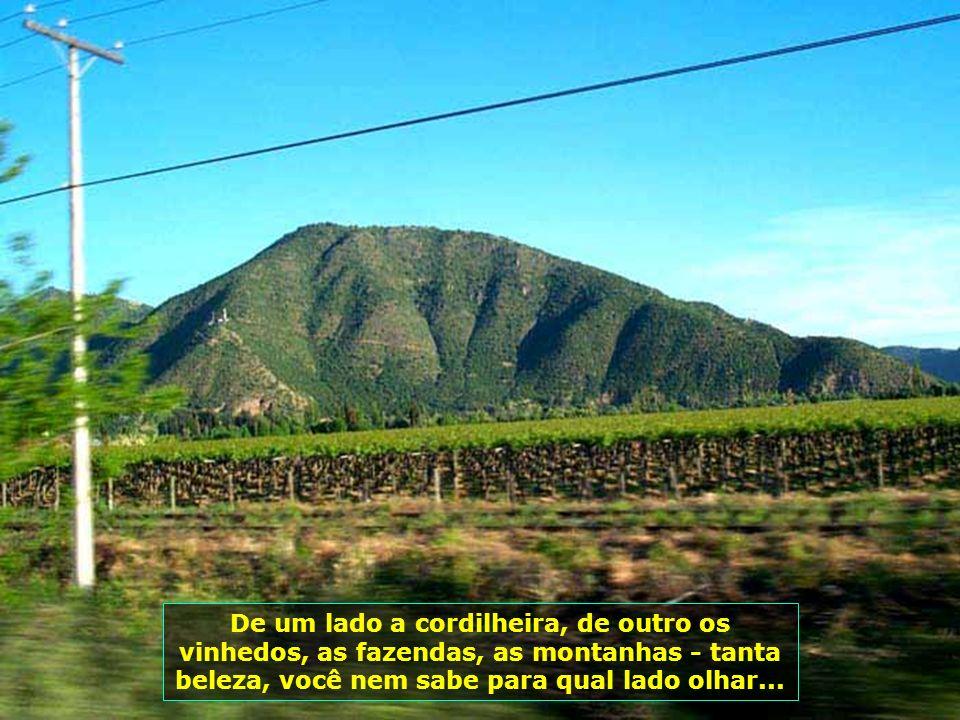 P0008851 - CHILE-SANTA CRUZ - PLANTAÇÃO DE UVAS