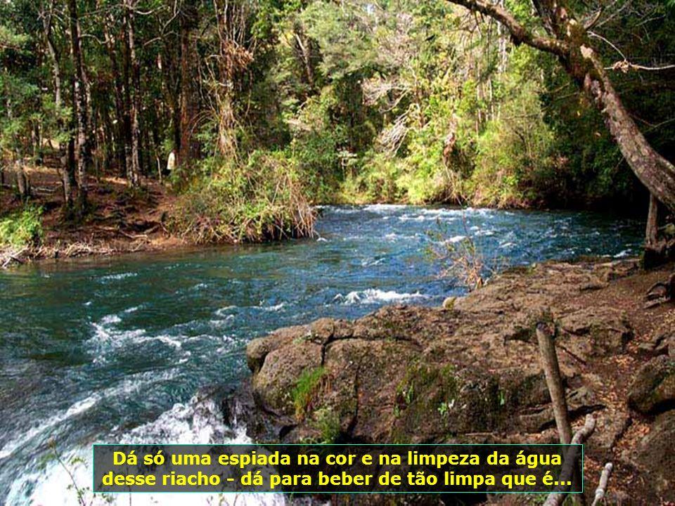P0008998 - CHILE-PUCON - RIO AZUL