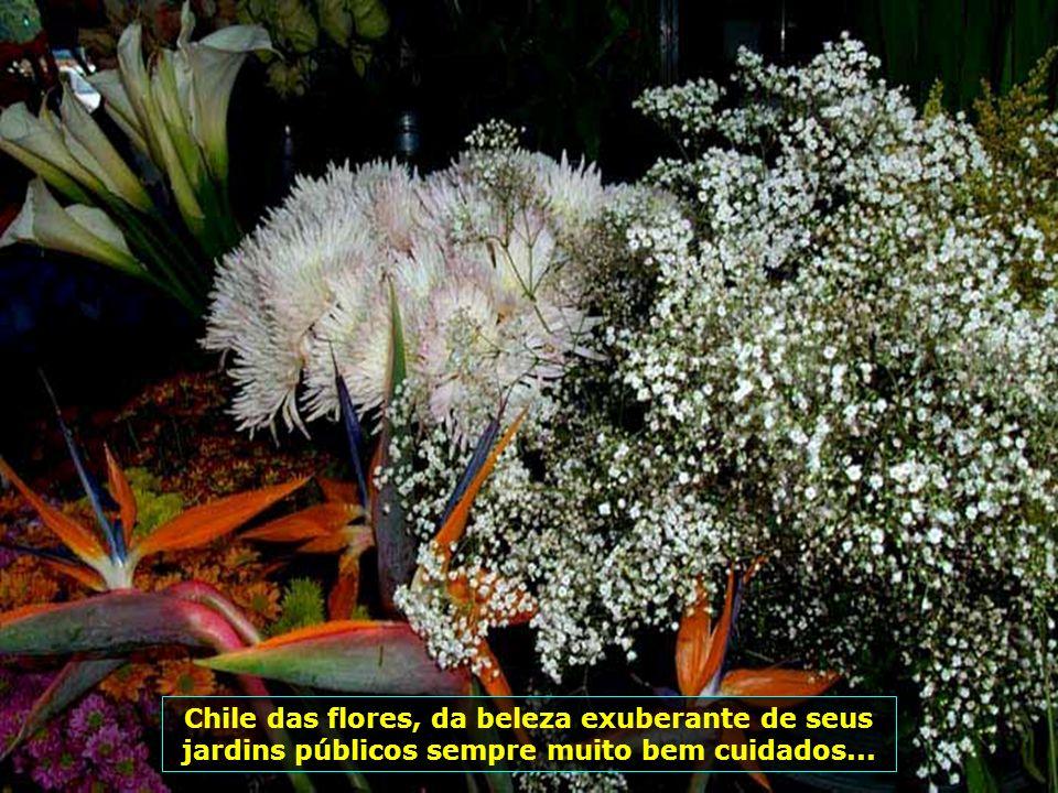 P0009293 - CHILE-SANTIAGO - FLORES