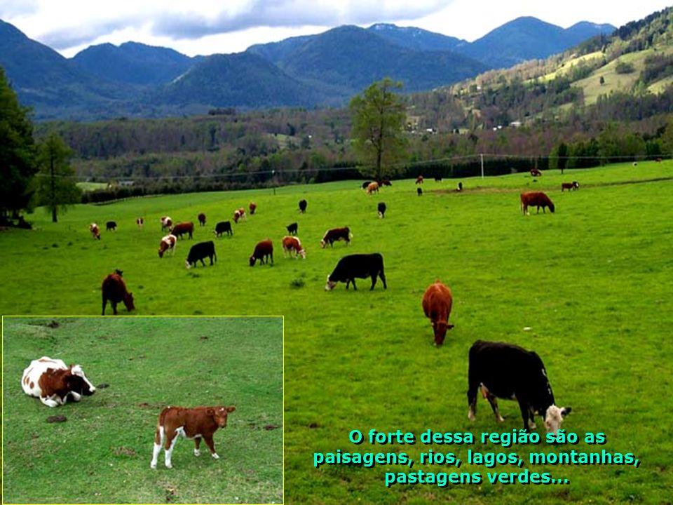 P0009097 - CHILE-PUCON - PINHEIROS LINDOS