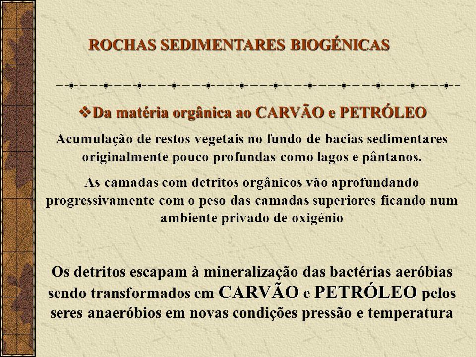 Da matéria orgânica ao CARVÃO e PETRÓLEO
