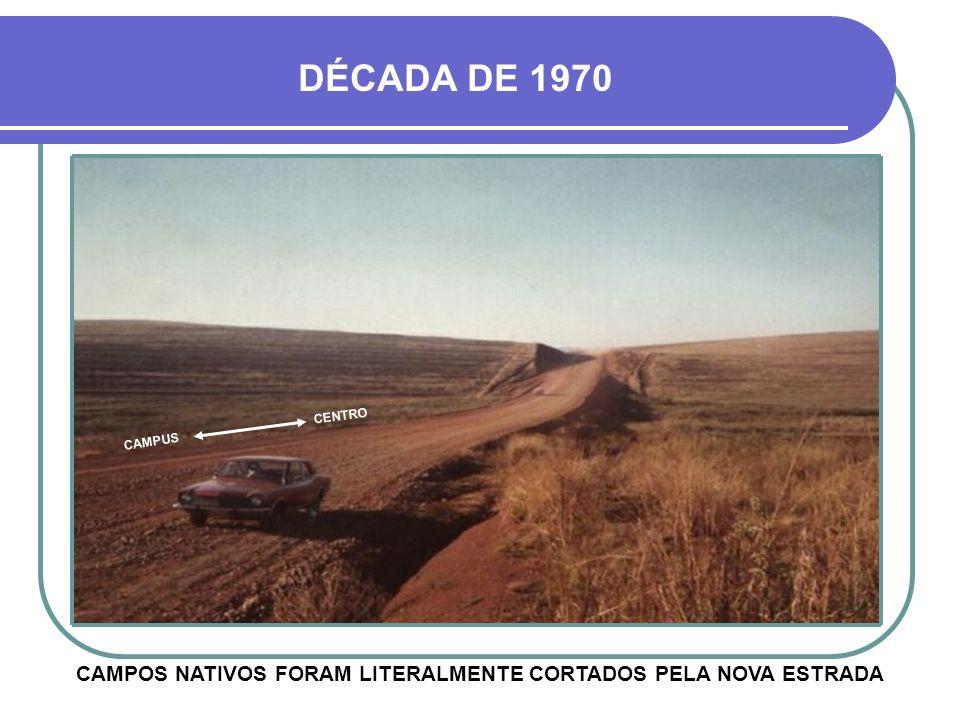 CAMPOS NATIVOS FORAM LITERALMENTE CORTADOS PELA NOVA ESTRADA